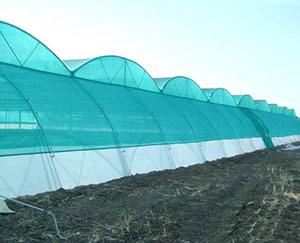 Agricultural Shade Net Project in Dubai,United Arab Emirates